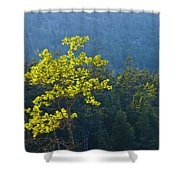 Tree With Yellow Leaves In Acadia National Park Shower Curtain