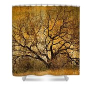 Tree Without Shade Shower Curtain