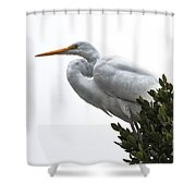 Treed Egret Shower Curtain by Robert Bales
