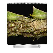 Treehoppers And Nymphs Mindo Ecuador Shower Curtain