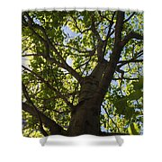 Trees 001 Shower Curtain