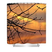Trees Ablaze In Autumn Shower Curtain