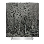 Trees Along The Greenway Shower Curtain by Janet Felts