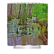 Trees And Knees In Tupelo/cypress Swamp At Mile 122 Of Natchez Trace Parkway-mississippi Shower Curtain