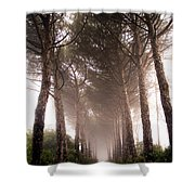 Trees And Mist Shower Curtain
