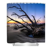 Trees At Driftwood Beach Shower Curtain