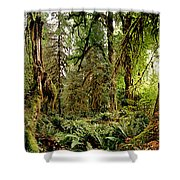 Trees At Olympic National Forest Shower Curtain