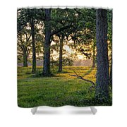 Trees At Sunrise Shower Curtain