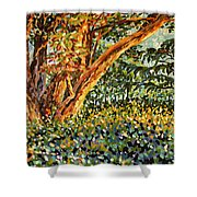 Trees At Sunset In Lafayette Park Shower Curtain