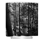 Trees Bw Shower Curtain