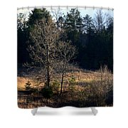 Trees By The Wayside Shower Curtain