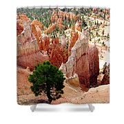 Tree's Eye View Shower Curtain