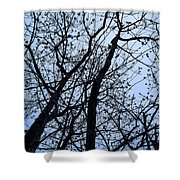 Trees From Below Shower Curtain