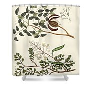 Trees From Hot Countries Shower Curtain