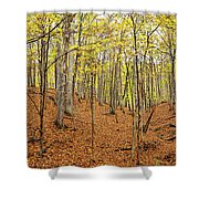 Trees In A Forest, Stephen A. Forbes Shower Curtain