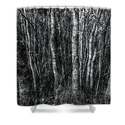 Trees In Black And White Shower Curtain