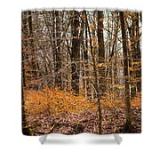Trees In The Forest In March With Orange Leaves Shower Curtain