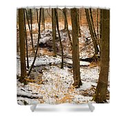 Trees In The Forest In Winter Brown And Orange Leaves Shower Curtain