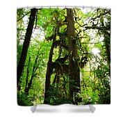 Trees In The Hoh National Rain Forest Shower Curtain