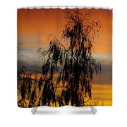 Trees In The Sunset Shower Curtain