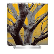 Winter Trees In Yellow Gray Mist 1 Shower Curtain