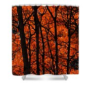 Trees Of Autumn Shower Curtain