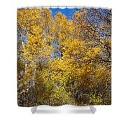 Trees Of Color Shower Curtain