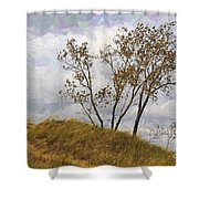 Trees Of The Beach Shower Curtain