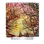 Trees Of The Four Seasons Shower Curtain