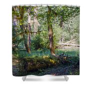 Trees Of The Rainforest Shower Curtain