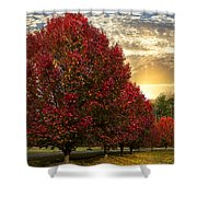 Trees On Fire Shower Curtain