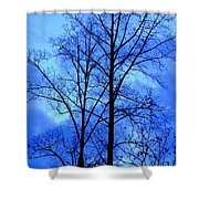Trees So Tall In Winter Shower Curtain