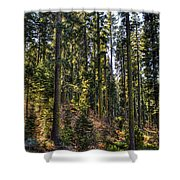 Trees With Moss In The Forest Shower Curtain