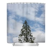 Treetop Shower Curtain