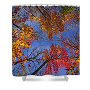 Treetops In Fall Forest Shower Curtain
