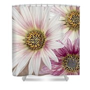 Tres Margaritas Shower Curtain
