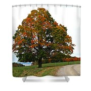 Tri-color Tree Shower Curtain
