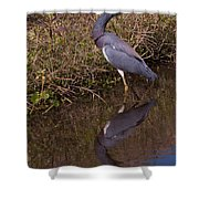 Tri-colored Heron 1 Shower Curtain