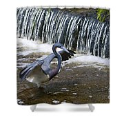 Tri-colored Heron No.2 Shower Curtain