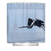 Tri Colored Heron Take Off Shower Curtain