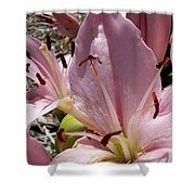 Tri Pink Lily Shower Curtain