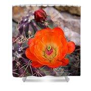 Trichocereus Cactus Flower  Shower Curtain