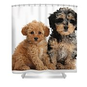 Tricolor Merle Daxie-doodle And Red Toy Shower Curtain