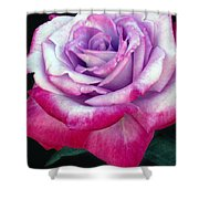 Tricolor Rose Shower Curtain