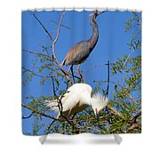 Tricolored Heron And Snowy Egret Shower Curtain