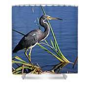 Tricolored Heron At The Pond Shower Curtain