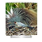 Tricolored Heron Incubating Eggs Shower Curtain