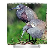 Tricolored Heron Male And Female At Nest Shower Curtain