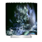 Tridacna Clams 3 Shower Curtain