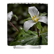 Trillium - After The Rain Shower Curtain
